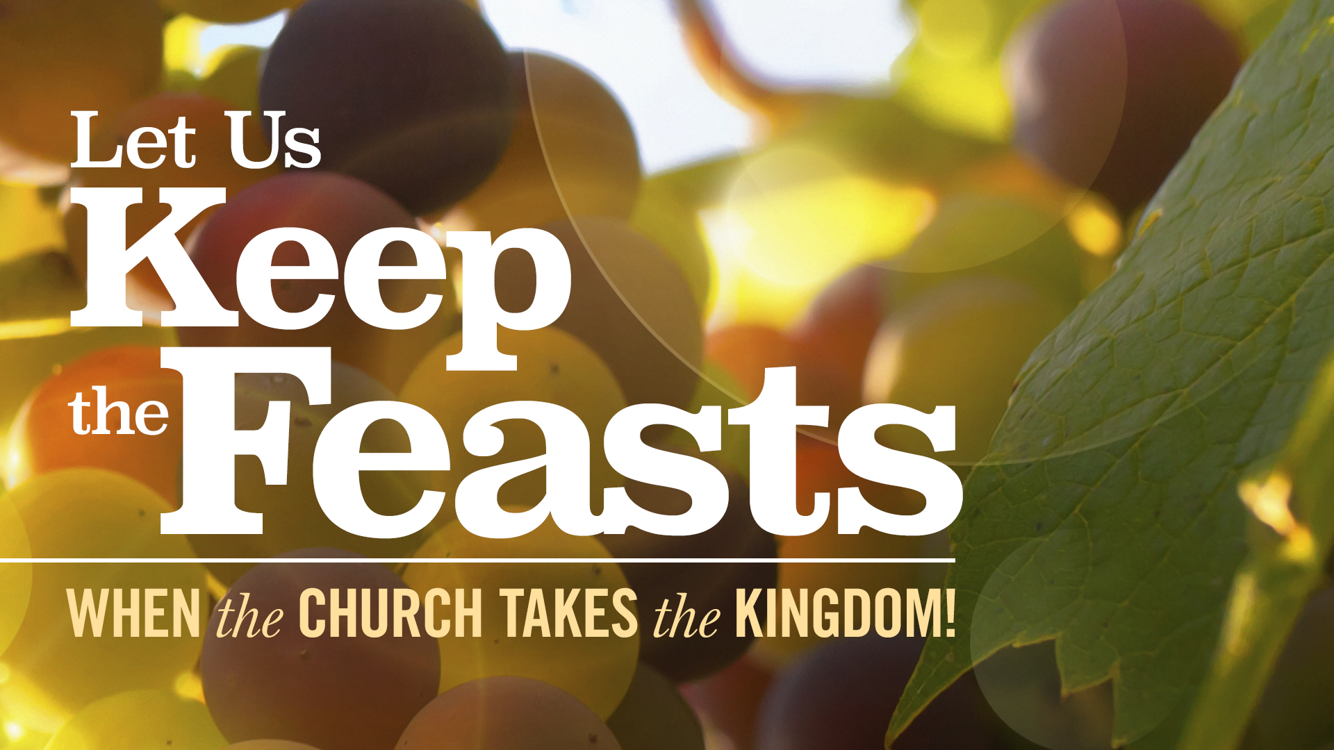 Feast Of Firstfruits Study Guide Ebook PDF 2019 - ZSOI4
