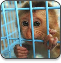 should animals have rights essay   buy essayphil  af  wordpress com