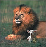 Photo of a lion and lamb sitting together.