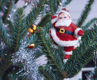 Santa Claus Christmas ornament in pine tree.