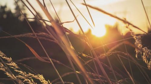 Sunset in a field.