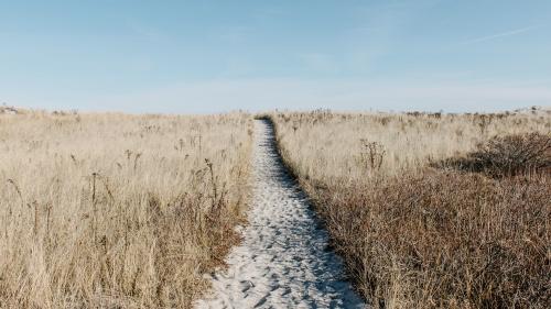 A sandy path.