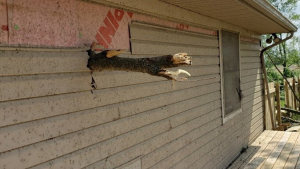 A tree branch punctures a Dayton home.