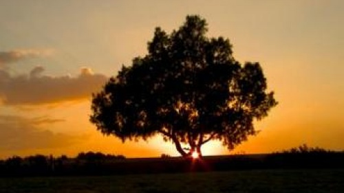 Sunset behind tree - The Rest of the Story: The Story of Rest