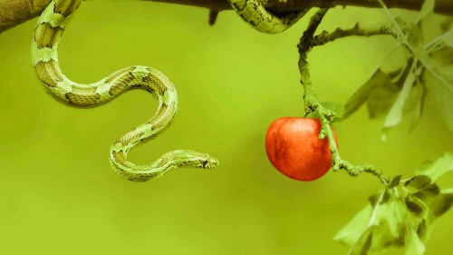 An green snake wrapped around an apple tree branch.