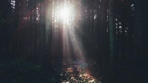 Sunlight shining through trees.
