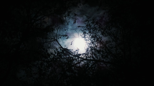 The light of moon through spooky tree branches.