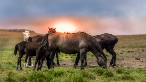 Horses in a grassy field.