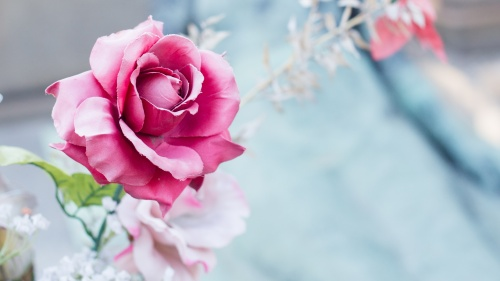 A rose by a grave site.