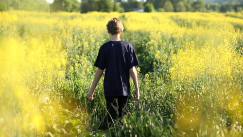 A young boy walking in a field of yellow flowers.