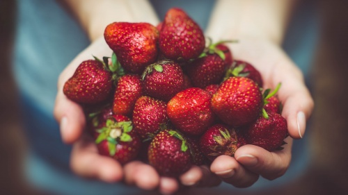 A woman's hands cupped holding strawberries.