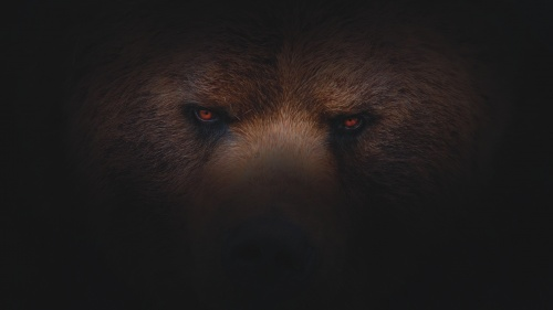 The eyes of a bear.
