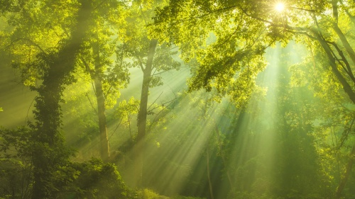 Sunlight shining through trees.