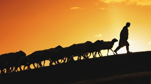A silhouette of a shepherd leading sheep up a hill.