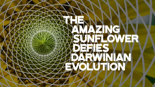 The Amazing Sunflower Defies Darwinian Evolution