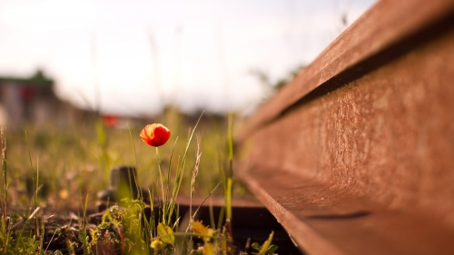 Photo of a small flower growing up next to old train tracks.