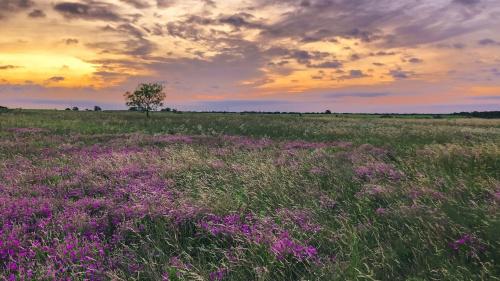 A field in Texas.