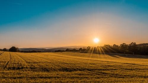 Sunrise over a field.
