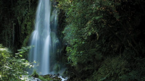 Photo of waterfall in a forest.
