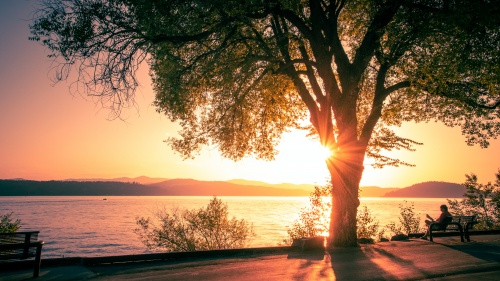 Whatever the hardships or joys that life may bring, we should strive to be like trees planted by the riverside