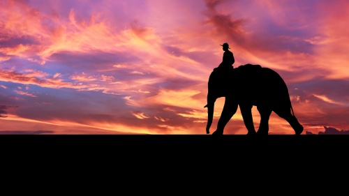 Silhouette against beautiful sunset of a boy riding an elephant