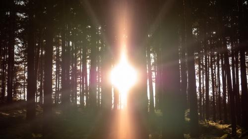 A bright light shining through trees.