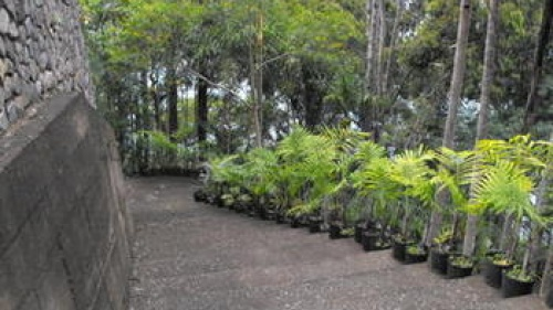 275 Steps in Panajachel, Guatemala