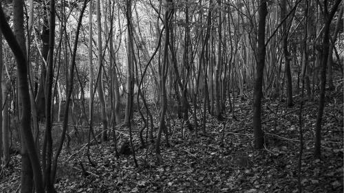 A dark woods.