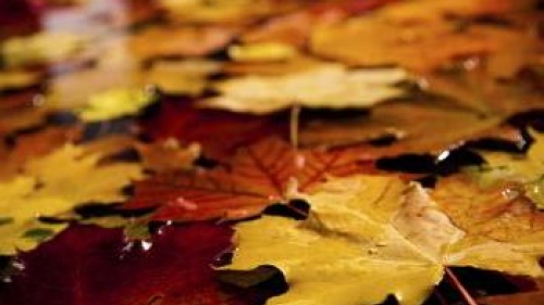 fall leaves of red, orange and yellow