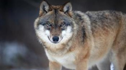 Crying Wolf: The December 2012 Apocalypse