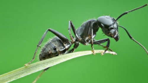 Upclose photo of an ant.