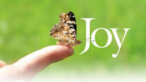 Joy in a Butterfly!
