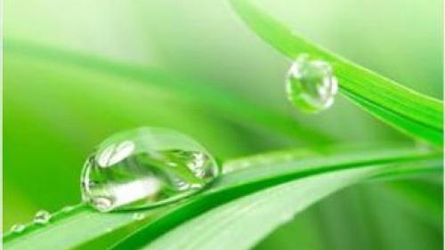 One Leaf of Grass