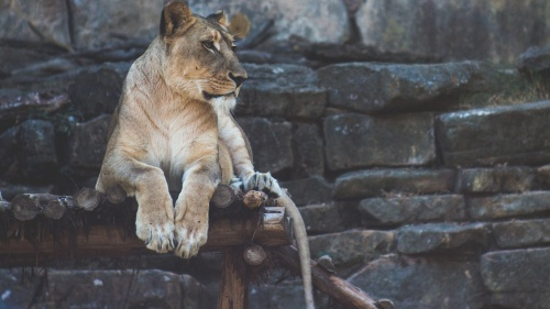 More and more, our world looks like his world of Babylon. Reading Daniel's story can be incredibly inspiring in times like these because not only did he live in the very seat of the Beast power, he even worked directly for its king at times in his life.