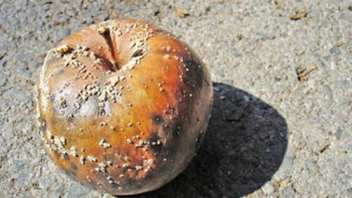 Rotten apple on concrete.