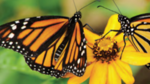 Spiritual Maturity: Are You Like a Butterfly?