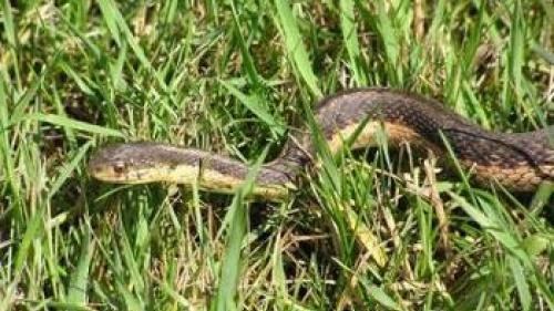 Surviving the Serpent - Part One
