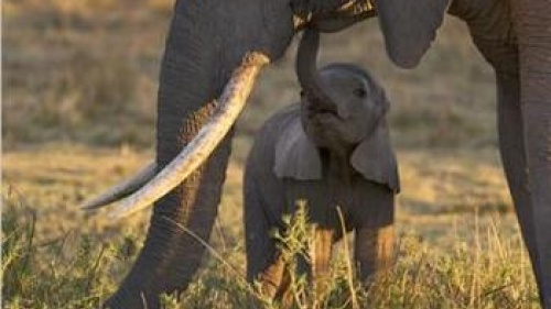 The Luangwa Elephants: A Lesson for All
