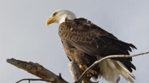 Vantage Point: Like an Eagle
