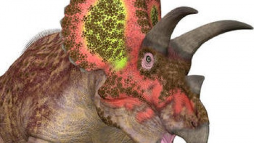 Artist rendition of a Triceratops.