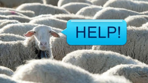 A sheep with a text bubble that says HELP!
