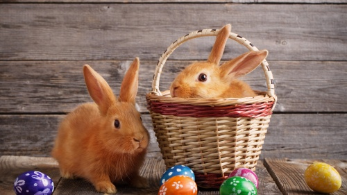 A basket with a bunny rabbit inside and Easter eggs laying outside.