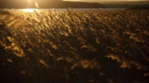 Crop at sunset - What Do the Holy Days Mean for Christians Today?