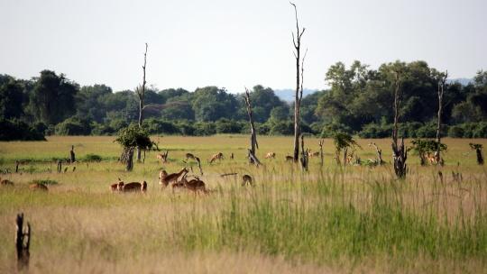 Mufulira, Zambia