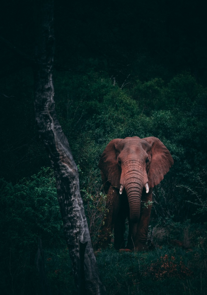 An elephant in the jungle