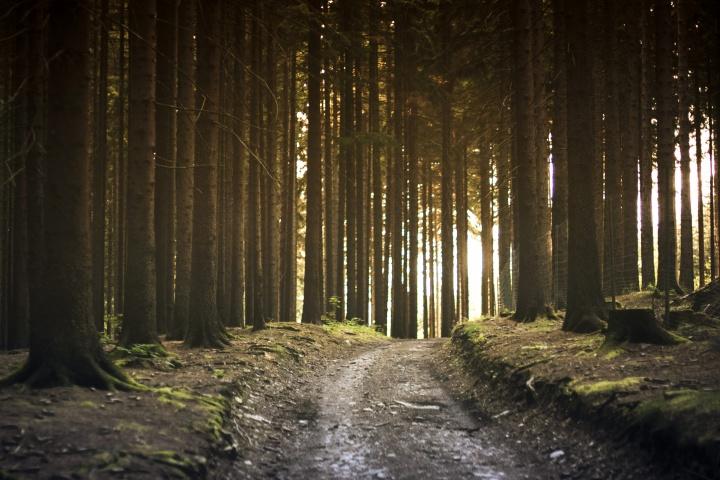 A stone path through a forest