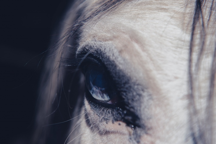 Upclose of the forehead and eye of a horse.