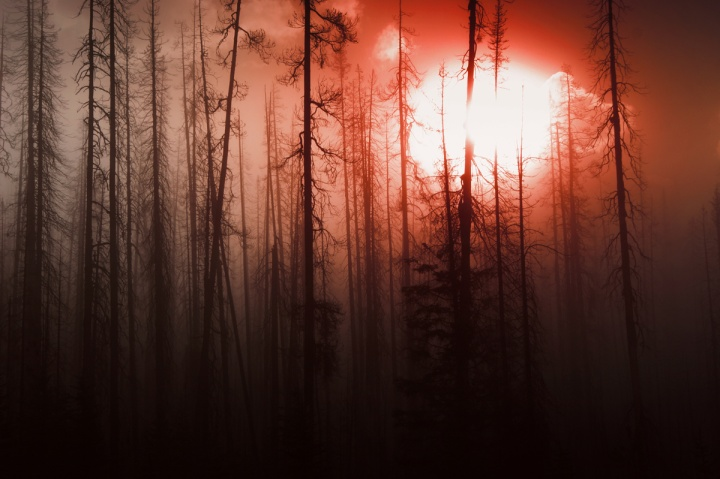 A old burnt forest with a red sky.