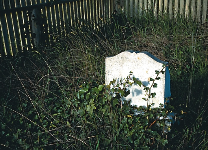 A tombstone covered with ivy.