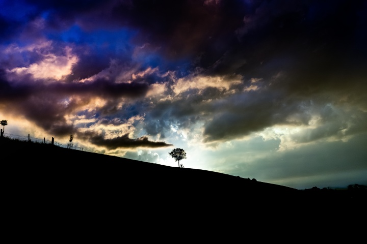 A tree with sunlight behind it on top of a hill.